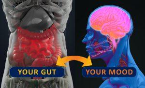 Gut | Holistic Medicine Ocala | Dr Kathy Veon
